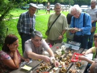 Compte rendu de la sortie du 10 septembre 2011 – Bois de St-Pierre à Smarves (86)