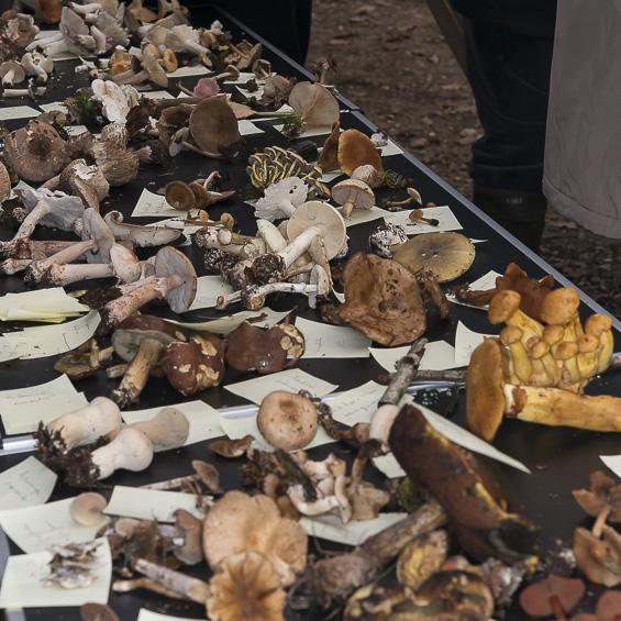 Aperçu des principaux genres de champignons