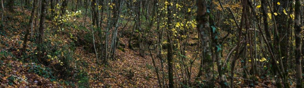 Sortie mycologique – Bois de Croutelle (86) – Samedi 19 novembre 2016
