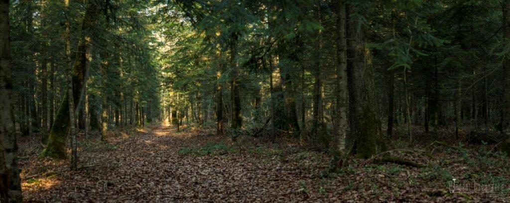 Sortie mycologique – Forêt de Saint-Sauvant (86) – Dimanche 4 décembre 2016