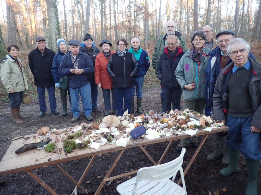Sortie mycologique – Forêt de Moulière – Le Gachet de Villiers à Bonneuil-Matours (86) – Samedi 26 novembre 2016